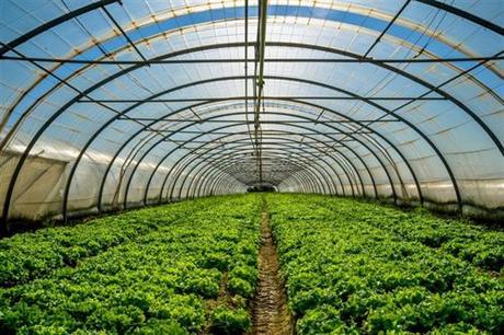 新野县优质蔬菜生产基地钢架大棚建设项目